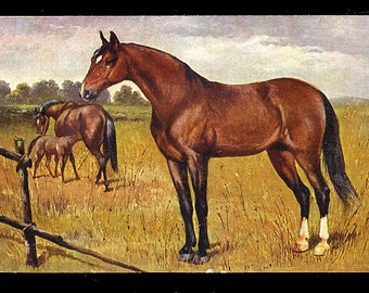Horses Standing & Grazing 1910 Germany Postcard