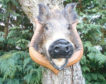 Vintage French Mounted Boars Head - Taxidermy