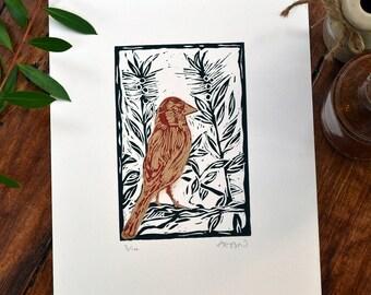 Goldfinch & bottlebrush flower - linocut print, black/red/gold, hand pulled, limited edition, British birds and gardens