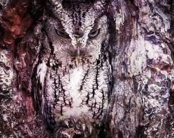 OWL PHOTOGRAPHY 8X10 PRINT, hidden owl, disguised in a tree
