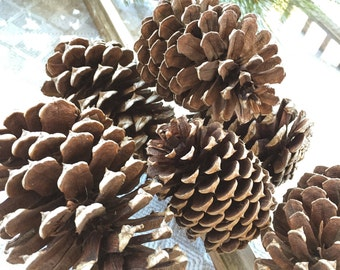 10 Natural Pinecones, Real, Preserved Pine Cones, Dried, Home Decor, Christmas, Winter, Xmas, Country, Rustic, Modern, Pine Cone