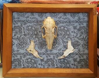 Rabbit Skull Frame
