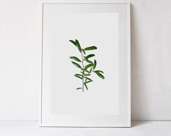 Green Plant Print Minimalist Poster, Scandinavian Art Print, Green Wall Decor Print Plant Art DIGITAL PRINT Botanical Art Printable DOWNLOAD