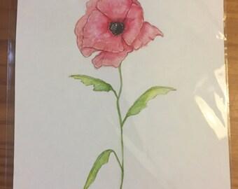 Poppy Watercolor