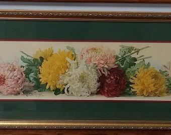Antique Chrysanthemums Chromolithograph by Paul de Longpre - One Yard Long - Framed
