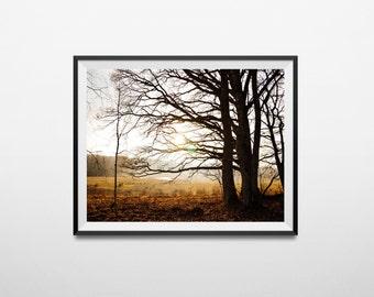 Photography print, photography, wall art, nature photography, landscape print, digital print, printable wall art,tree photography, tree