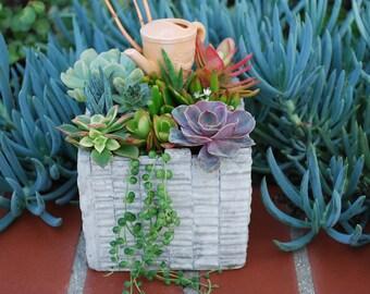 6 Inch Succulents Arrangement DIY- Ceramic Planter - Centerpiece Home Garden Decor