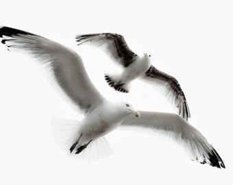 Seagulls Black and White 1