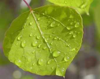 Aspen leaf Proverbs 3:19