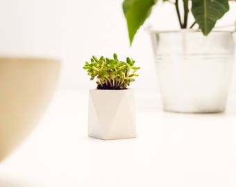 Mini concrete planter | Planter | Flower pot | Planters | White