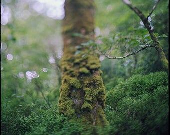 Ireland, Glendalough, Green, Forest, Photography, Art Print, Irish Nature, Analog, Landscape, Forest, Home, Cabin, Office Decor, Tree, 30x30