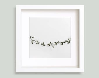 Green Vine, Botanical Photo, Garland, Wreath, Wild Plant, Greenery, Gallery Wall, Green leaves, Square Photo, 5x5, 8x8, 9x9, 10x10, 12x12