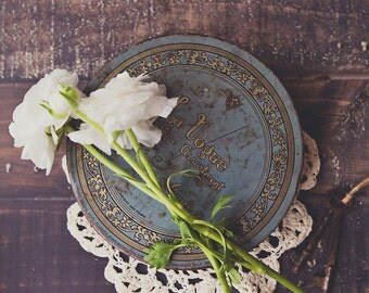 White Ranunculus ~ 8x10 photo print