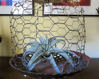 Chicken Wire Cloche on Vintage Brass Fruit Stand