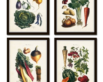 French Vegetable Print Set, Giclee, Art, Illustration, Botanical Prints, Wall Art, French Vegetable Prints, Kitchen Art, Vegetable Prints