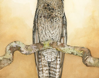 The Potoo Art Print