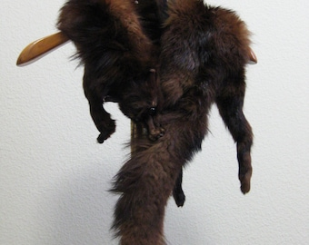 Red Fox Fur Stole Glass Eyes with Head Legs Tail Taxidermy Fox Scarf