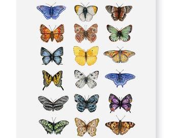 Butterflies of North America Fine Art Giclee Print
