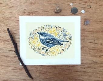 "Female Cerulean Warbler, Scientific Illustration, Specimen Illustration, Bird Illustration, Giclee Print of an Original Illustration 8x10"""