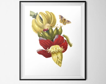 Botanical Print, Vintage Botanical, Banana Print, 16x20 Poster INSTANT DOWNLOAD, Red Yellow Kitchen, Food Art, Banana Tree Illustration
