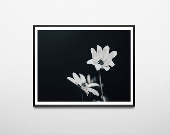 Flower Print, Photography print, photography, wall art, nature photography,Flower photography, digital print, printable art, Black and White