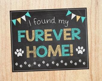 Pet Adoption sign Sign PRINTABLE cat dog animal shelter photo prop chalkboard digital instant download