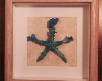 Framed decorative crystallised starfish artwork - Free postage in Aus