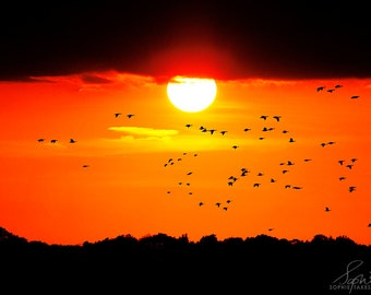 Sunset photography, sunset print, nature photography, landscape, orange, mounted print, fine art photography, bright, birds, 5x7,11x14,24x36