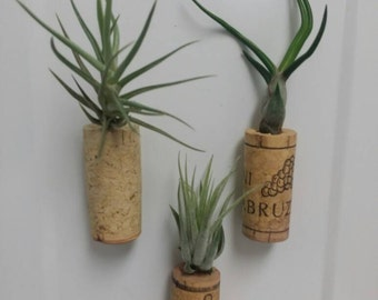Air Plant Cork Magnets | Set of Three Cork Magnets | Airplant Magnets | Air Plant Magnets | Fridge Magnets | Custom Magnets | Air Plants
