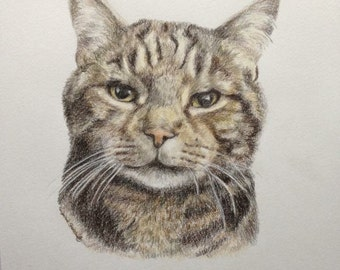 Coloured Pencil Pet Portrait