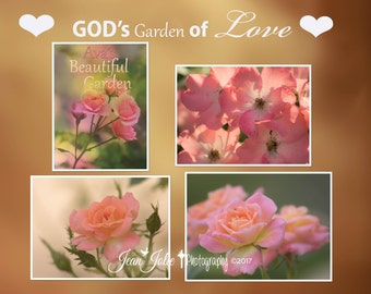 Rose photo set four photographs romantic print personalized love nature photography God's Garden of love