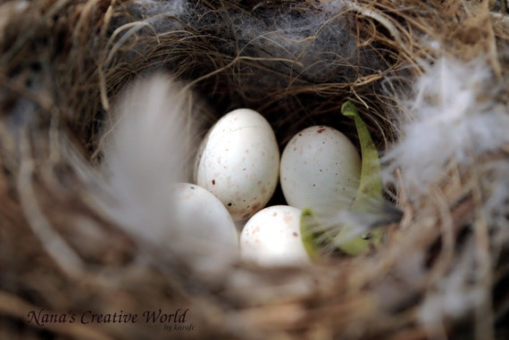 Bird's nest with eggs - close-up photography