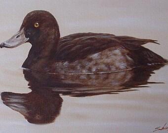 John Silver Original Oil Painting - Female Tufted Duck