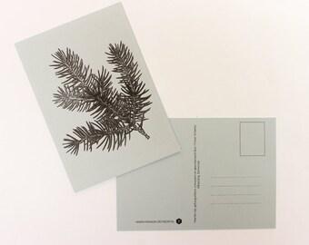 Pine branch Christmas card, greeting card, postcard, postcard