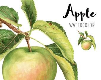 Apple watercolor, Apple illustration, Watercolor fruit, Realistic, Still life, Fruit, Clip art, Apple branch, Kitchen decor, Digital