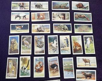 Ogdens Zoo Studies  1937  British Cigarette Cards  31 of 50