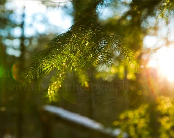 Forest Sunset through the Evergreens Photo Print;  Forest Photography, Nature Photography, Outdoor Photography, Winter || PHYSICAL PRINT