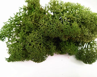 Gress Green Moss Preserved Reindeer Moss Forest Green Dried Moss For DIY Jewelry Making,Hanging Terrarium Accessories