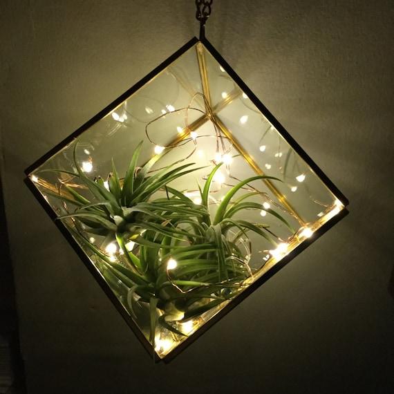 Air Plant Terrarium S: Air Plant Terrarium Firefly Lights Glass Terrarium