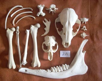 Small Animal Bone Assortment 2A
