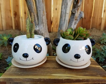 Panda lover adorable  kids planter pot with succulent