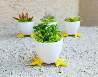 Super adorable Baby chick/duck pot with living succulent