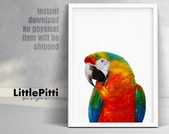 Parrot print, tropical bird print, parrot photo, beautiful bird print, colour photography, parrot decor, Ara macao print, ara macao parrot