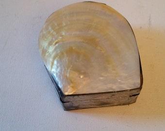 Abalone she'll box