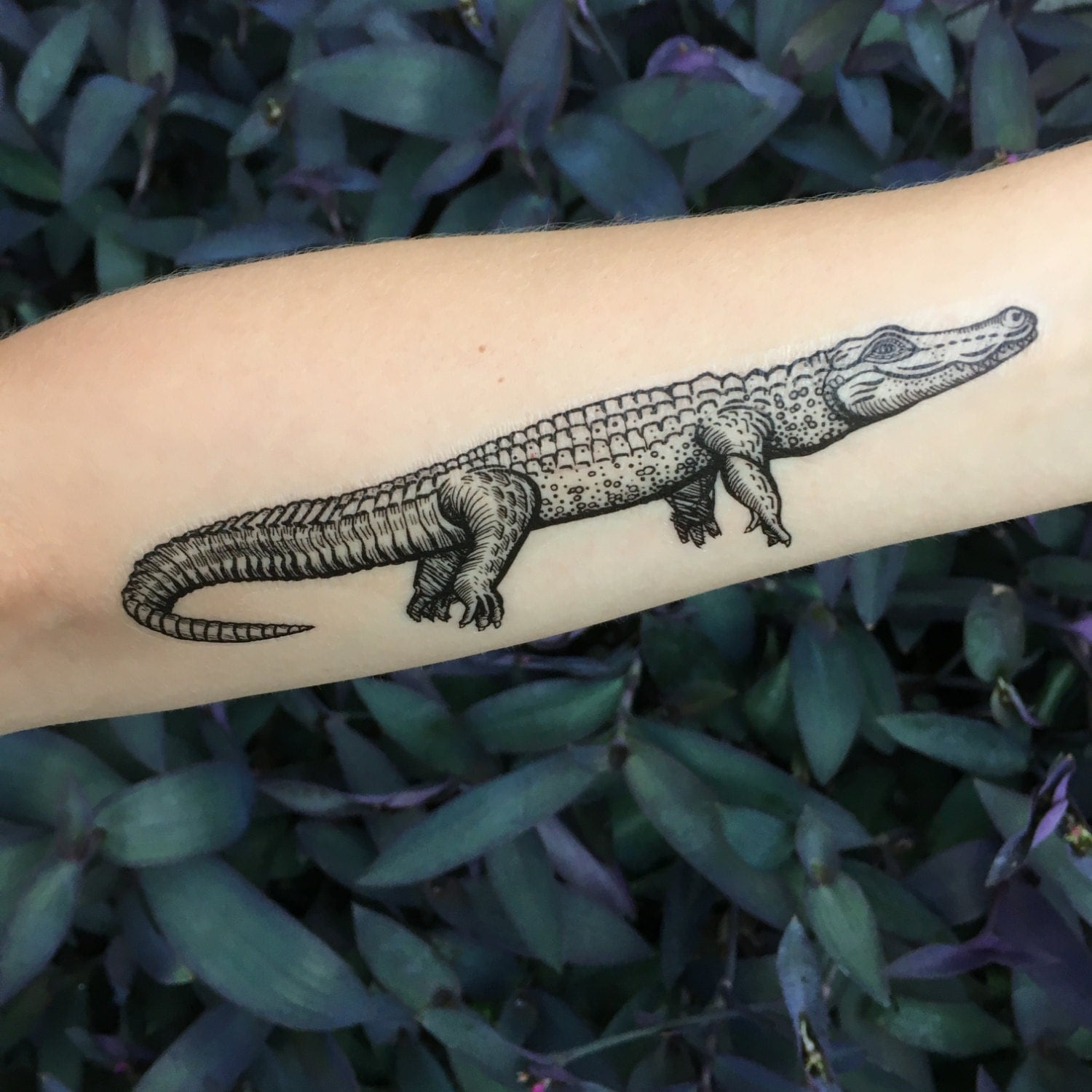 Alligator Tattoo Drawing