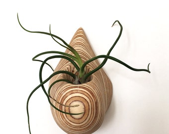 Wall air plant holder.  Birch plywood carved sculpture. Indoor Air plant holder.