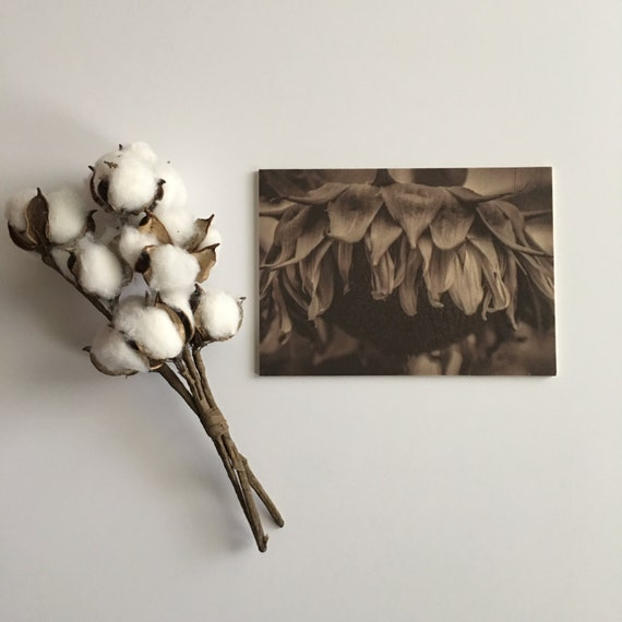 Sunflower Photograph - Wood Print - Fine Art Photography - Pictures Sunflowers - Home Decor - Desk Shelf or Mantle Vignette - Christmas Gift