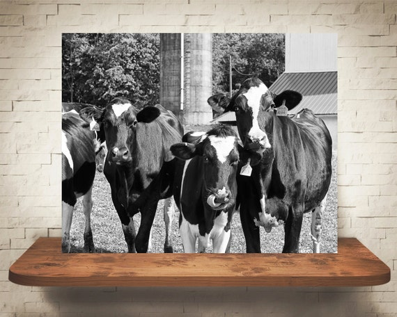 Cow Photograph - Fine Art Print - Black White Photography - Wall Art - Wall Decor -  Farm Pictures - Farm House Decor - Cows