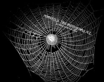 MIT 2x Spiderweb Overlay