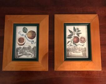 Framed Vintage Botanical Prints in Wooden Frames - Set of 2